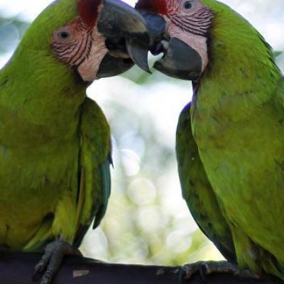 28 perroquets retires un eleveur du centre manche
