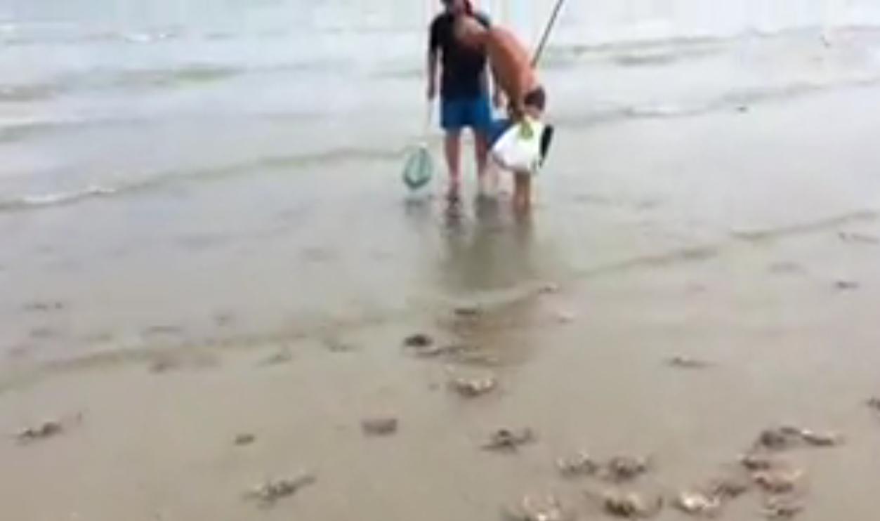 vidéo Des centaines d'araignées envahissent une plage