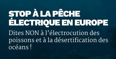 L'UE ouvre la voie à la pêche électrique : « les lobbies de la pêche industrielle ont gagné »