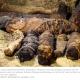 Des momies de plus de 2000 ans découvertes en Egypte