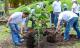 RECUPERONS 10 ANNEES DEMISSION DE CO2 EN PLANTANT DES ARBRES