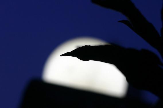 La pleine lune perturbe bien le sommeil