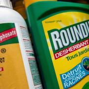Roundup desherbant